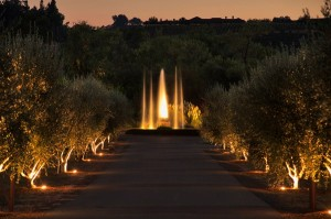 White Oak Vineyards and Winery at Night