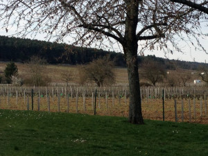 Vineyard in Beaune