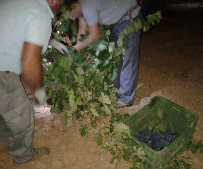 Night-harvest-in-spain1