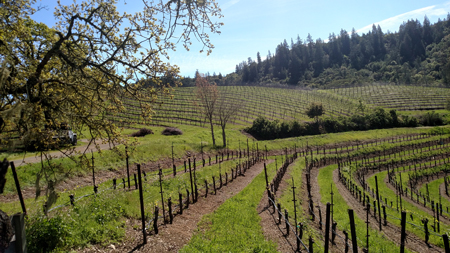 vineyards-at-speedy-creek