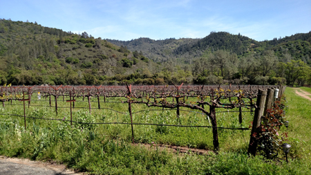 Switchback-ridge-vineyards4
